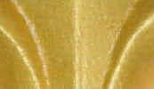 901 Gold