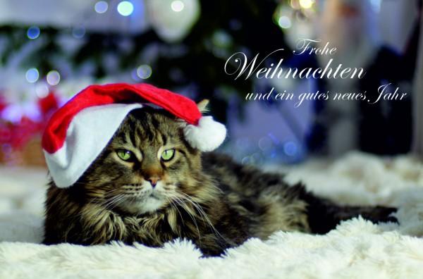 Geschenkgutschein Weihnachten Katze