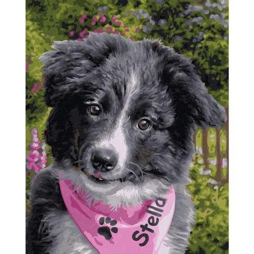 Border Collie Puppy 24 x 30 cm